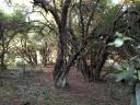 Campo en Garzón. Punta For Sale 189915