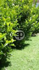 Casa en Pinares. Punta For Sale 1284896