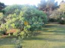 Casa en Punta Del Este. Punta For Sale 1344378